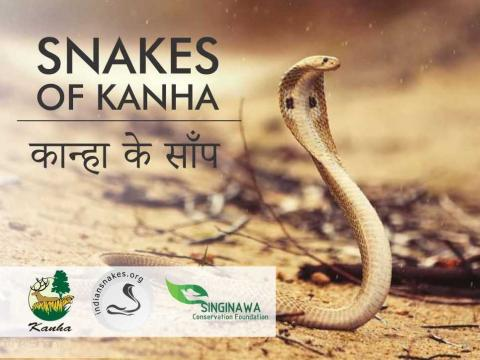 Snakes of Kanha